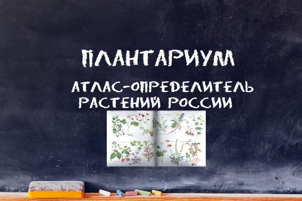 Плантариум: атлас-определитель растений России